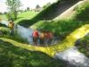 Bachsperrung_tuggen_052_06.2012