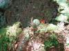 sac_047_05-2012